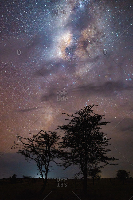 Trees with cloudy night and with the milky way