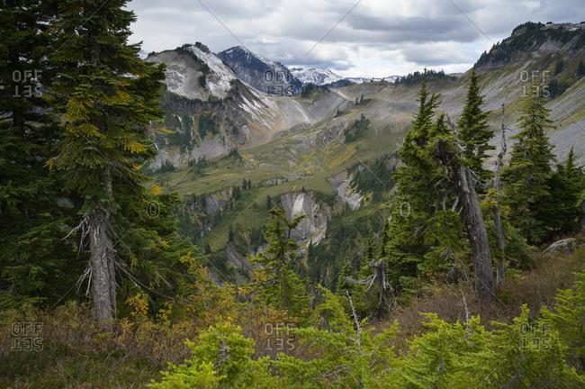 Alpine mountain scene with evergreen trees