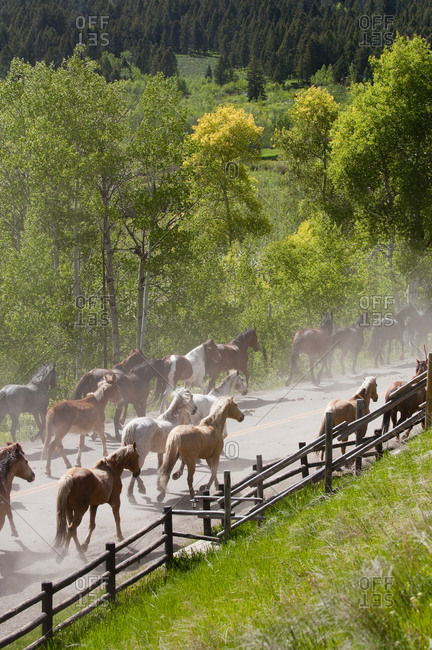 A team of horses and donkeys run down a road in the countryside