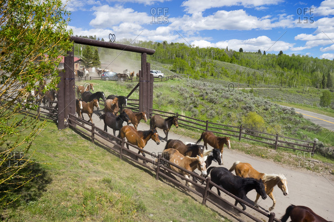 Horses herded out the front entrance of heart six ranch