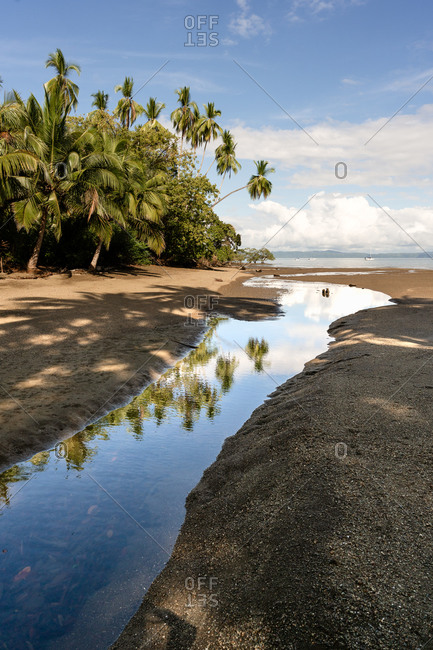 Palm trees in Costa Rica reflecting in tide pool on beach