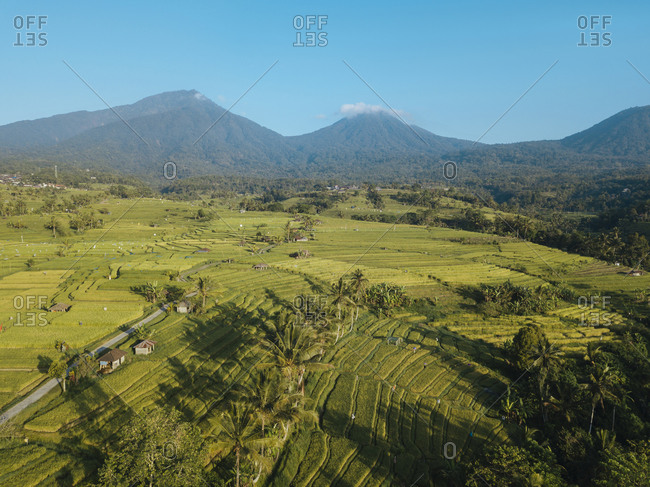 Indonesia- Bali- Aerial view of Jatiluwih Rice Terrace