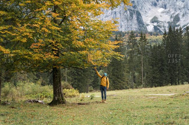 Hiker touching autumn leaves- Friuli Venezia Giulia- Italy