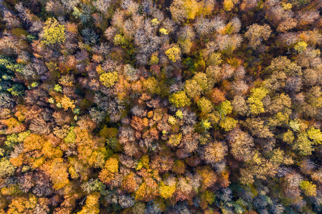 Germany- Baden Wurttemberg- Rems-Murr-Kreis- Aerial view of forest in Autumn