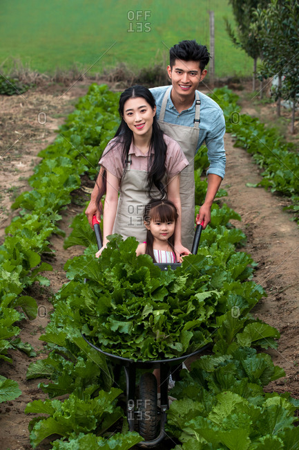 Asian family picking vegetables outdoors