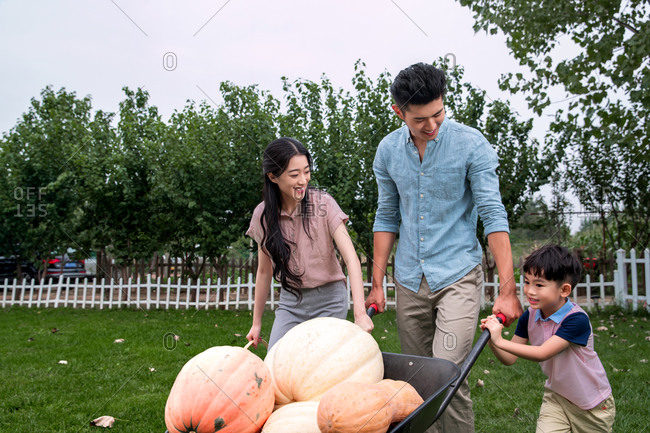 Asian family of three wheelbarrows pumpkins