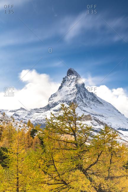 Yellow larch trees framing Matterhorn in autumn, Pennine Alps, Zermatt, canton of Valais, Swiss Alps, Switzerland, Europe
