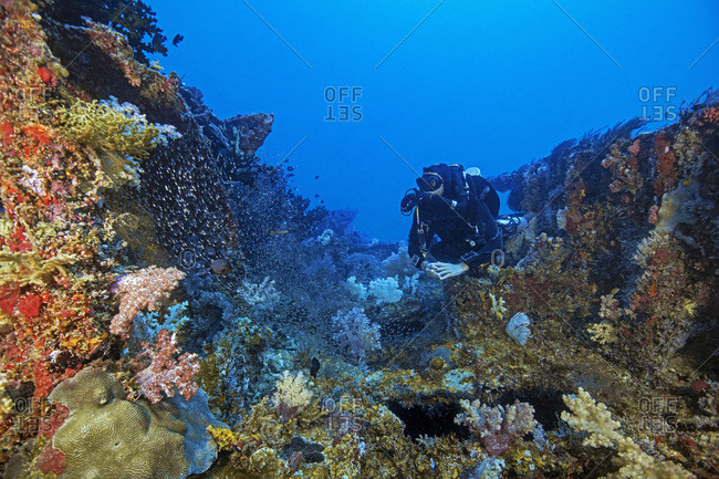 Palau- Koror- Diver exploring ship wreck overgrown with coral reef