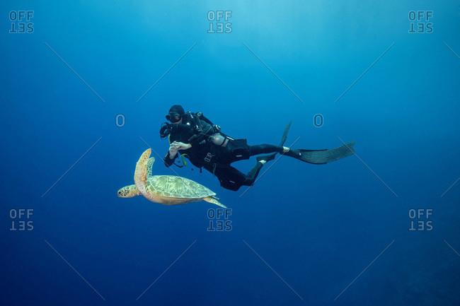 Palau- Blue Corner- Diver and sea turtle underwater
