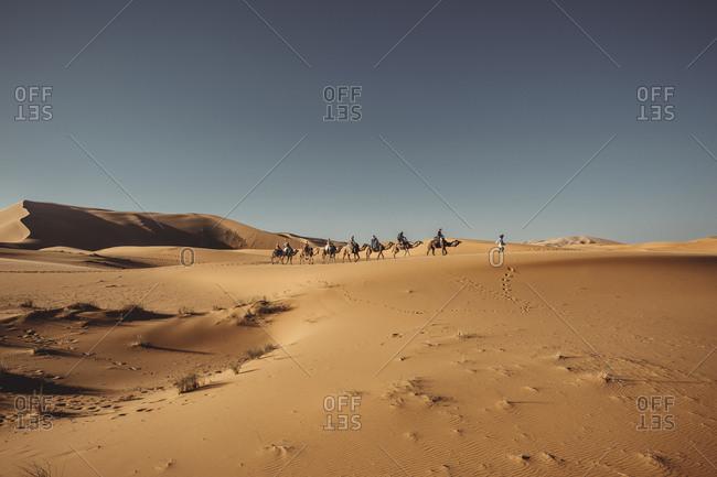 People riding dromedary through the desert