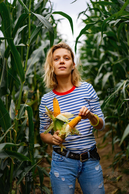 Young woman in stripped ves shirt in a corn field picking up the corn.