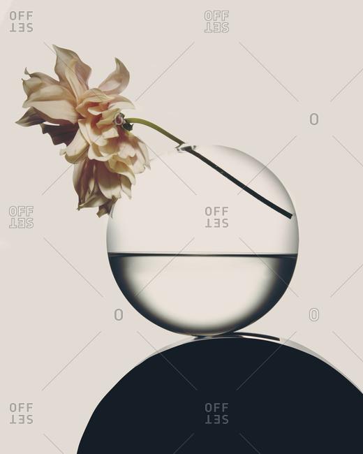 Pastel pink flower in a round vase