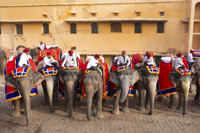 Jaipur, India - January 4, 2020: Tour guides on elephants at Amber Fort, Jaipur, India
