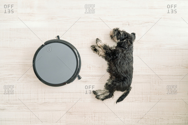Top view of cute little dog sleeping on light wooden floor next to pet friendly robotic vacuum cleaner
