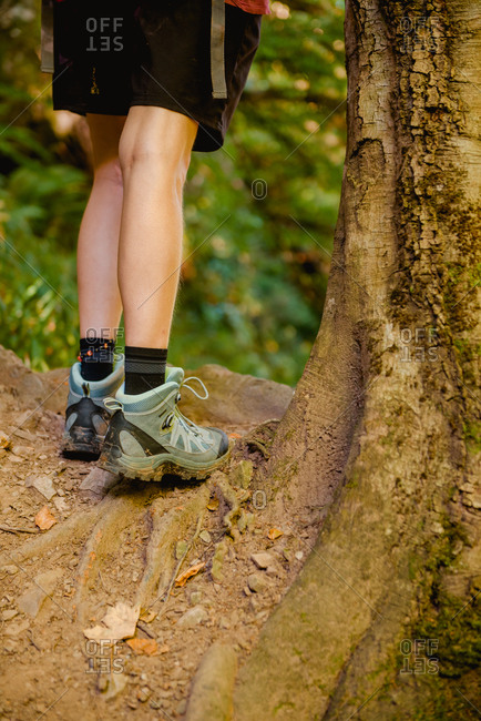 Cropped faceless hiker in short and sneakers standing on tree roots while following touristic route in forest in summertime