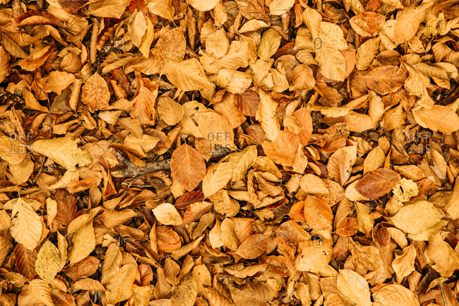 From above fallen dry colorful foliage covering ground in autumn sunny day