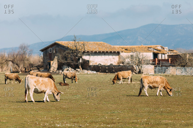 Scenic view of grazing animals on pasture in summer