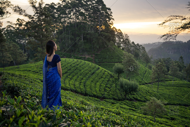 Back view of anonymous ethnic female in blue traditional clothes looking away while standing on tea meadows in Haputale in Sri Lanka