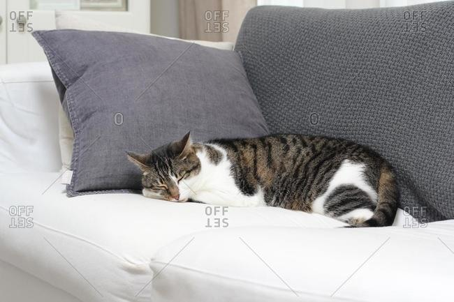 Tabby cat lying on a sofa sleeping