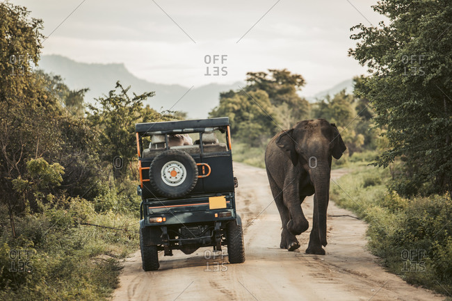 Sri Lanka- Sabaragamuwa Province- Udawalawe- Elephant walking past safari car in Udawalawe National Park