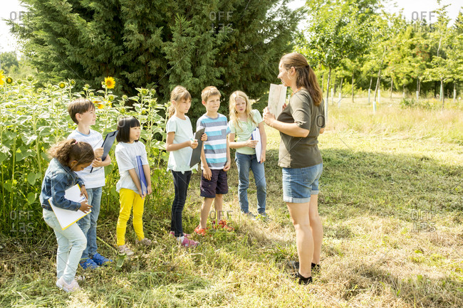 School children learning about nature in a sunflower field