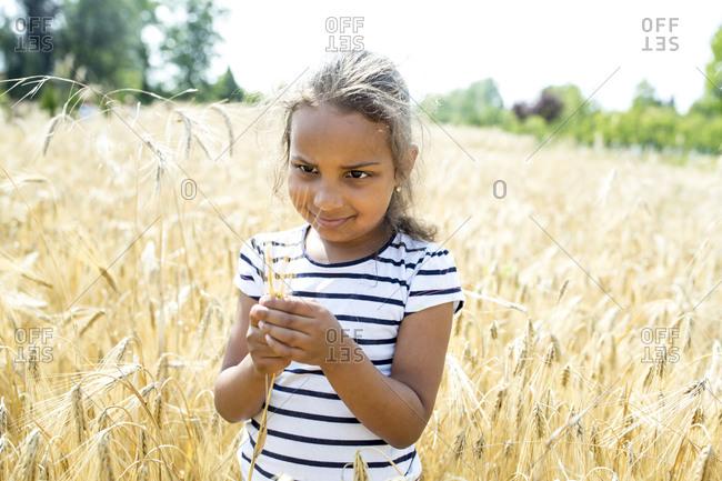 Little girl standing in wheat field- looking at wheat ear