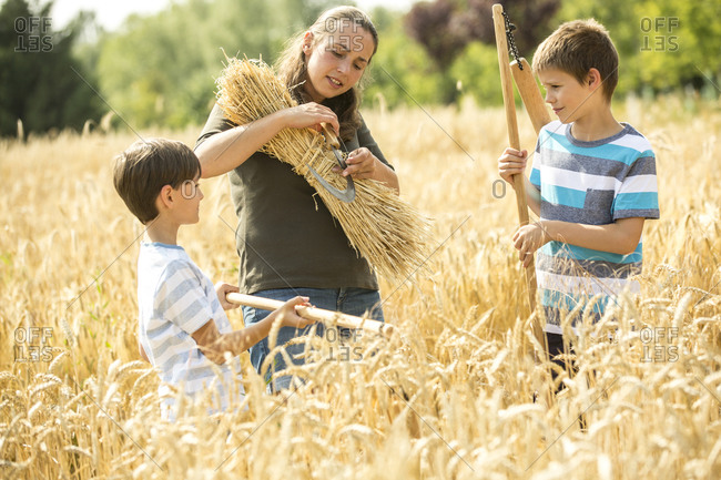 Children helping to harvest wheat