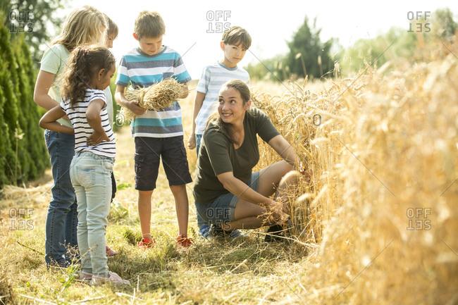 Children examining wheat field with their teacher