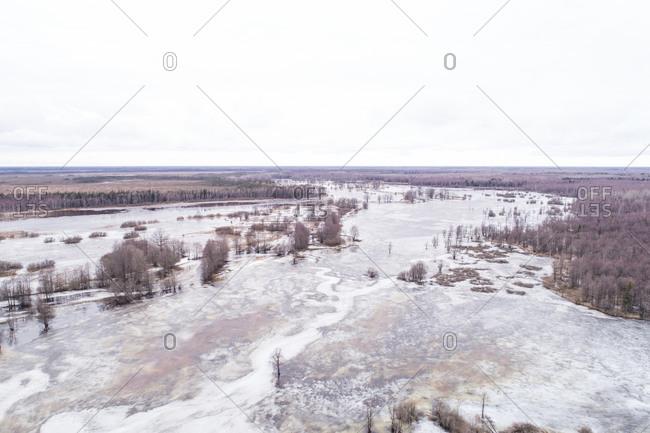 Aerial view of frozen water with pine trees, Tipu, Viljandi County, Estonia