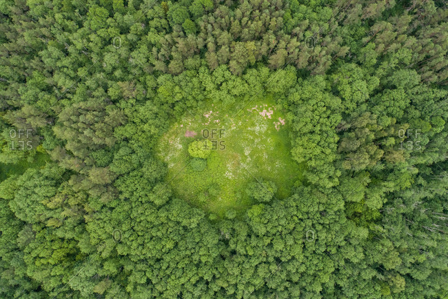 Aerial view of small green area surrounded by trees, Suurem�isa,Laane County, Estonia