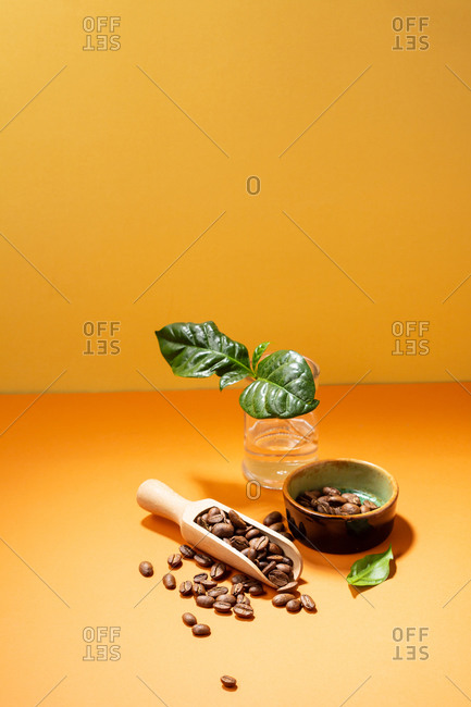 Coffee beans with plant and wooden spoon