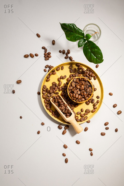 Overhead view of coffee beans with plant and wooden spoon on tray
