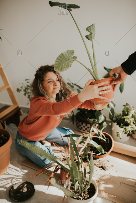 Person handing woman a potted plant