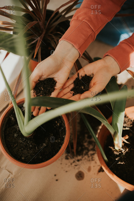 Hands of a woman adding soil to a potted plant