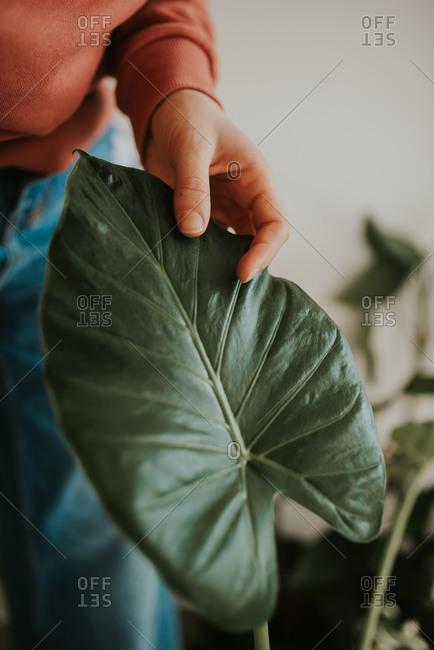 Close up of a woman touching leaves of a potted plant