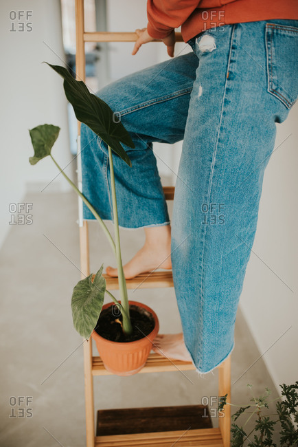 Woman standing with a potted plant on a ladder