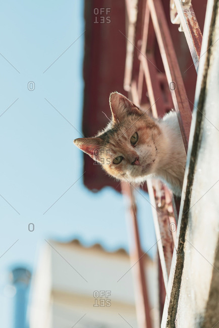 View of cat looking through iron railing from below