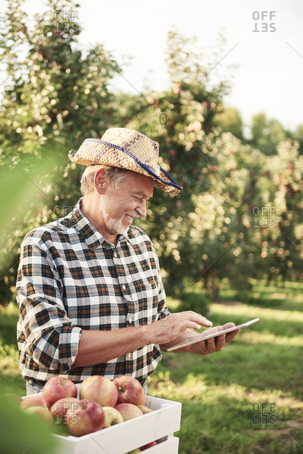 Fruit grower using digital tablet in his apple orchard