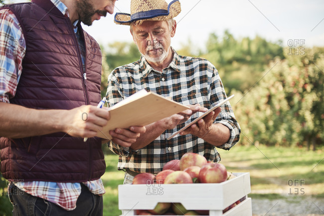 Fruit growers checking quality of harvested apples