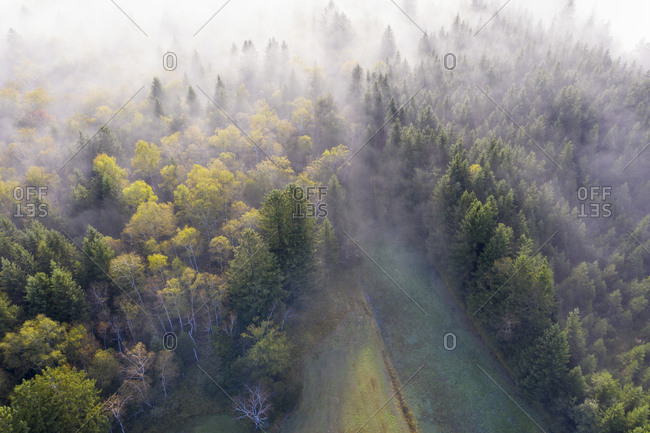 Germany- Bavaria- Geretsried- Aerial view of autumn forest shrouded in fog