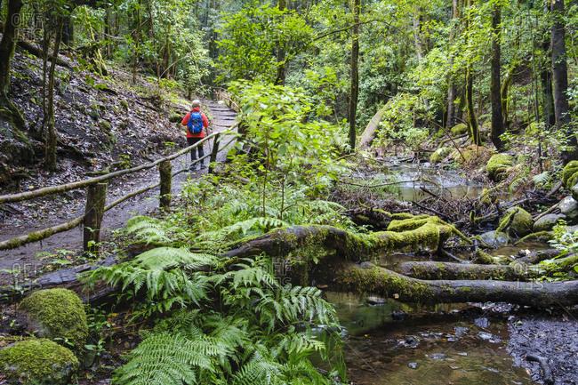 Spain- Canary Islands- La Gomera- Female backpacker hiking along stream in Garajonay National Park