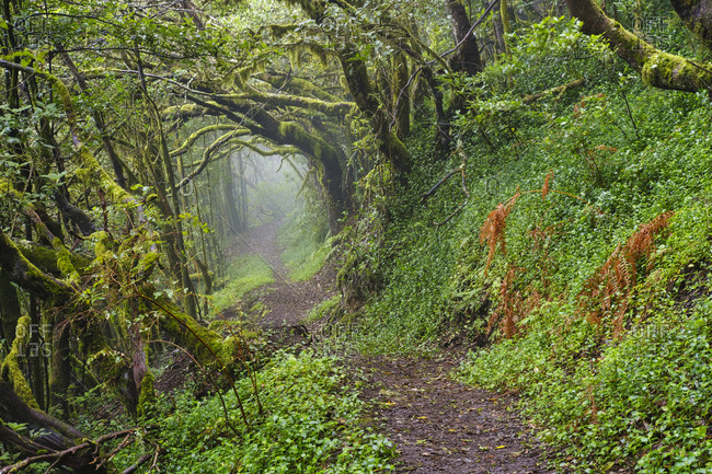 Spain- Canary Islands- La Gomera- Empty forest footpath in Garajonay National Park