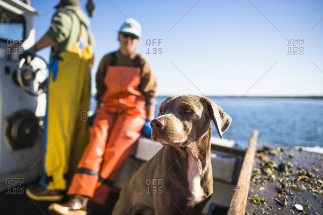 Boat dog joining for Aquaculture shellfishing on Narragansett Bay