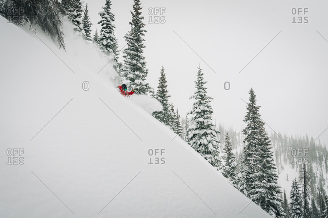 Skier in Powder and Trees