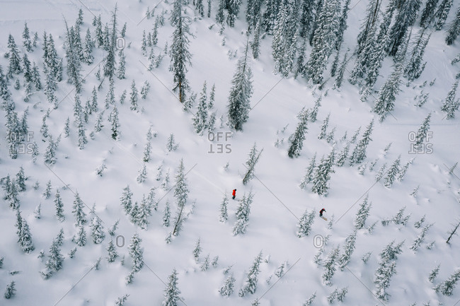 Skiers photographed from drone skiing powder through trees