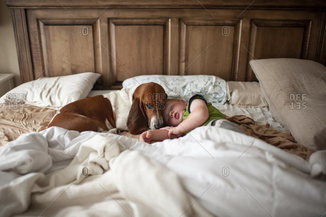 Toddler boy sleeping in bed with basset hound dog next to him at home