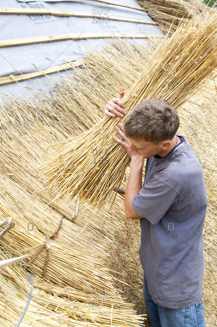 United Kingdom, England, Symondsbury - June 12, 2012: An old barn being re thatched in the Dorset village of Symondsbury