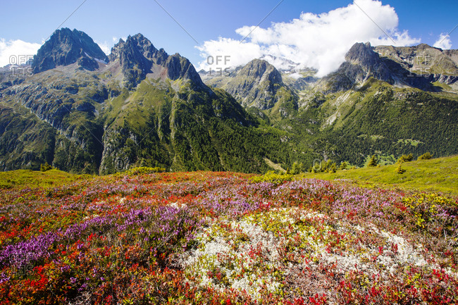 The Aiguille Rouge range from the Aiguillette des Posettes with Bilberry plants coloring up in late summer.