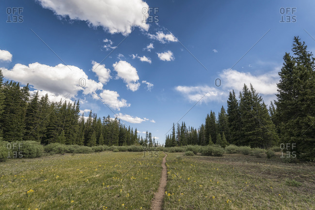 Hiking Trail in the Buffalo Peaks Wilderness