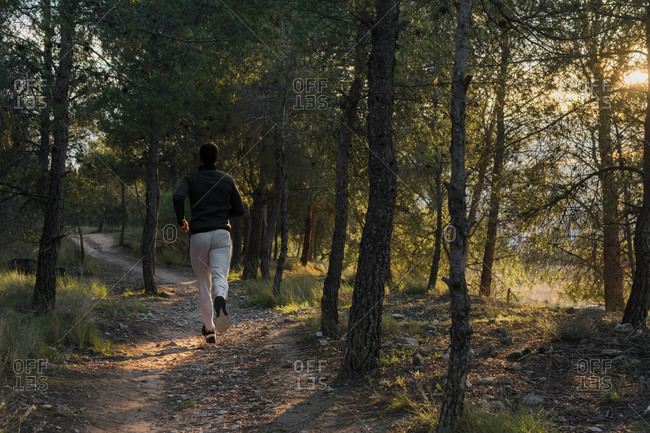 Back view of anonymous man in tracksuit working on muscles of legs running in forest on sunny day